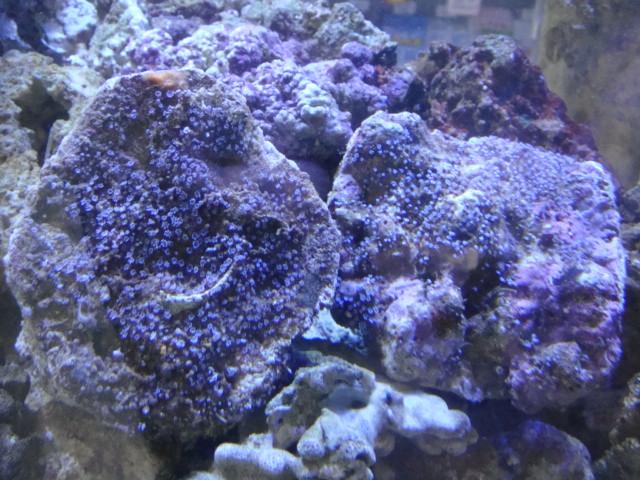 海水魚・サンゴ_f0189122_12593557.jpg