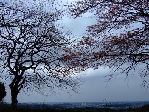 f0147025_200661.jpg