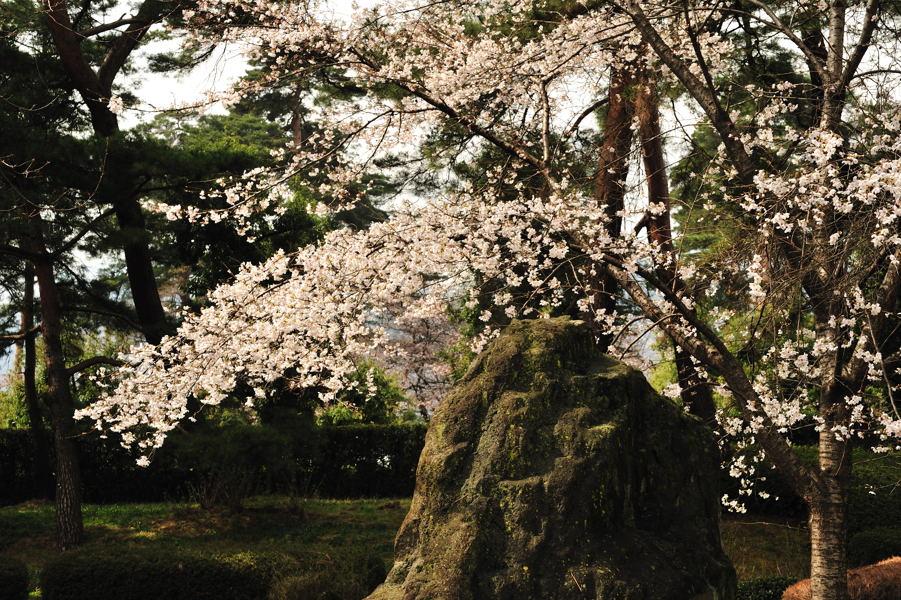 桜が続きます_e0037126_21204979.jpg
