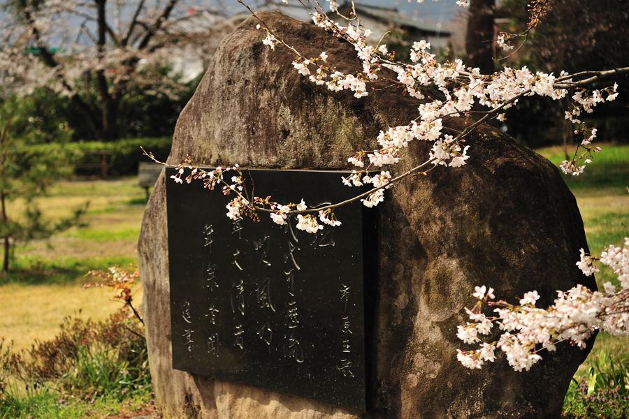 桜が続きます_e0037126_21212777.jpg