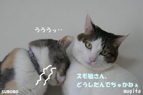f0063729_0371381.jpg