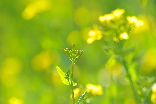 春の光_c0067040_22454655.jpg