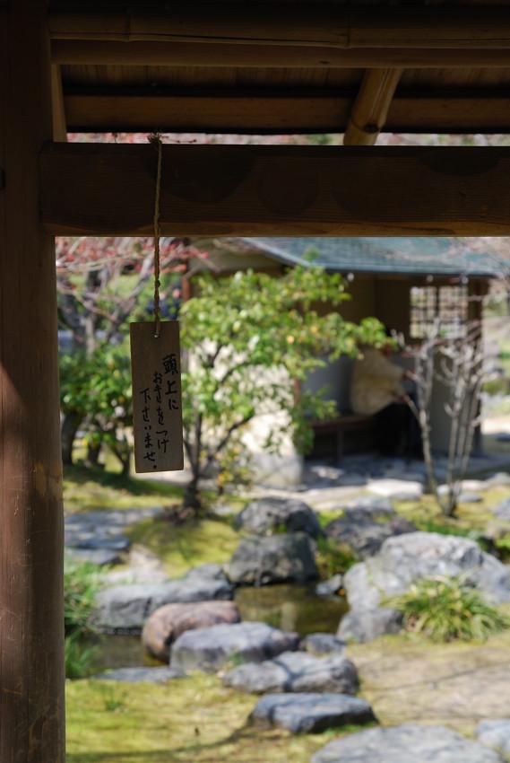 白鳥庭園、雑景_c0171945_22272189.jpg