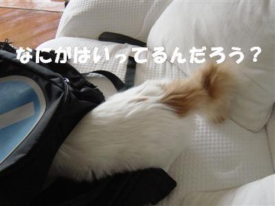 c0195250_15583463.jpg