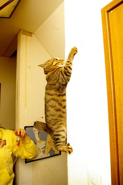 猫もおだてりゃ、壁登る!_a0028451_12203127.jpg