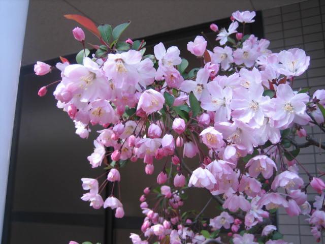 長男が京都に帰って来ました。_f0181251_1644333.jpg