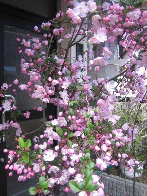 長男が京都に帰って来ました。_f0181251_16445747.jpg