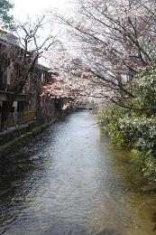 京都の桜_c0187754_21424535.jpg