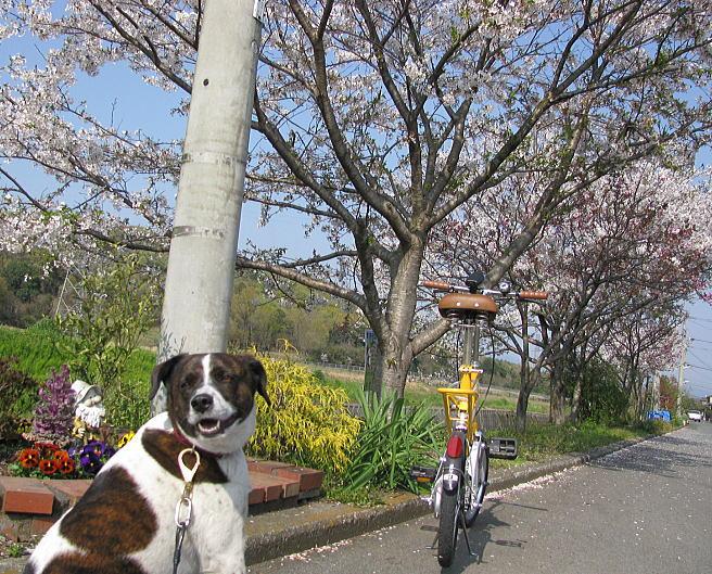 『春』ですねぇ。。。 _f0178858_16394579.jpg