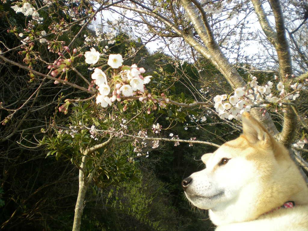 2009年3月31日(火)バトルでもカメラ目線?_f0060461_2044187.jpg