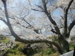 お花見ドライブ_f0152061_18362949.jpg