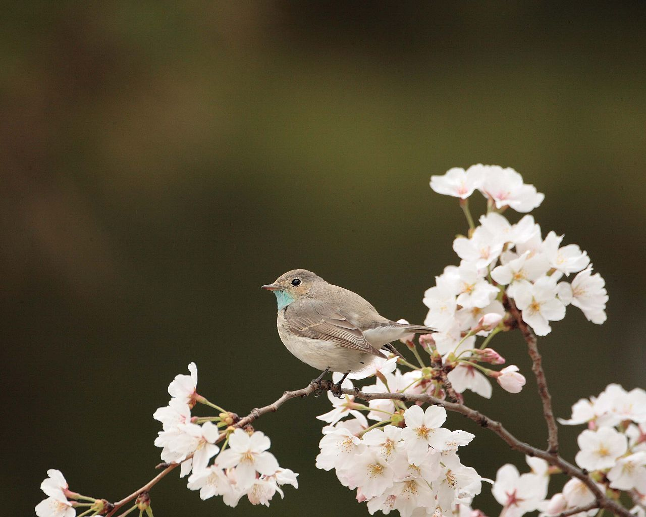 珍鳥キタオジロビタキ_f0105570_22354110.jpg