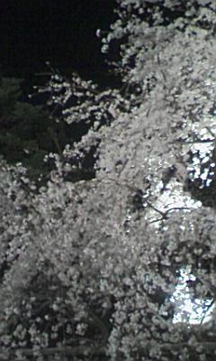 六義園のしだれ桜_e0013178_2331927.jpg