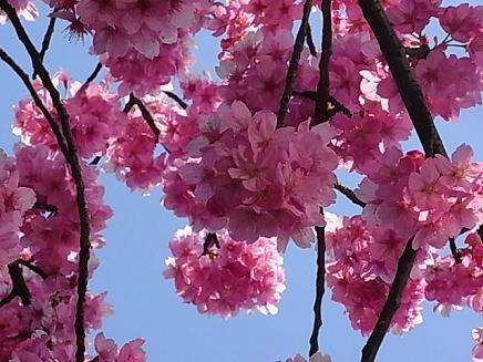 三ッ池公園のお花見②_b0105897_225095.jpg