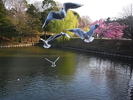 三ッ池公園のお花見②_b0105897_23153.jpg