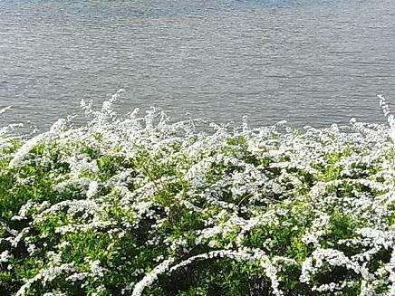 三ッ池公園のお花見②_b0105897_253737.jpg