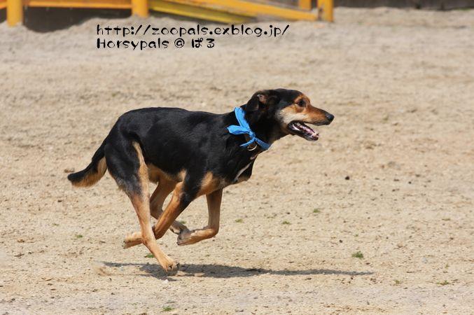 f0158697_12445943.jpg