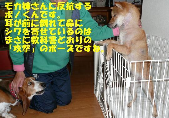 f0121712_035321.jpg