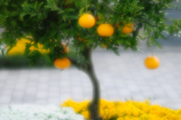 f0144018_6461980.jpg