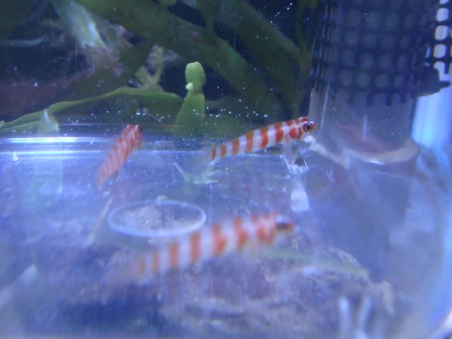 海水魚・サンゴ・水草・日本産淡水魚_f0189122_1115364.jpg
