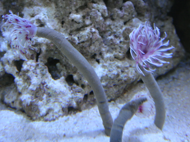 海水魚・サンゴ・水草・日本産淡水魚_f0189122_1124750.jpg