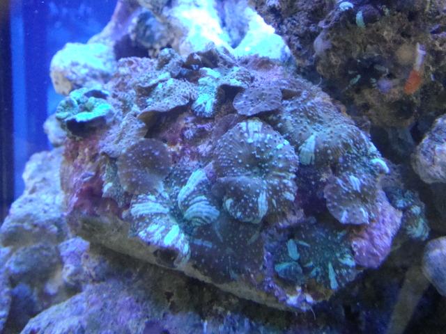 海水魚・サンゴ_f0189122_16515737.jpg