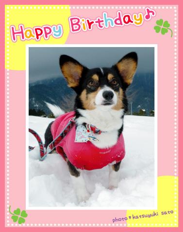 鈴ちゃん、お誕生日おめでとう♪_d0102523_18591826.jpg