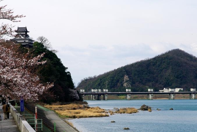 国宝・犬山城 桜_d0145934_8492224.jpg