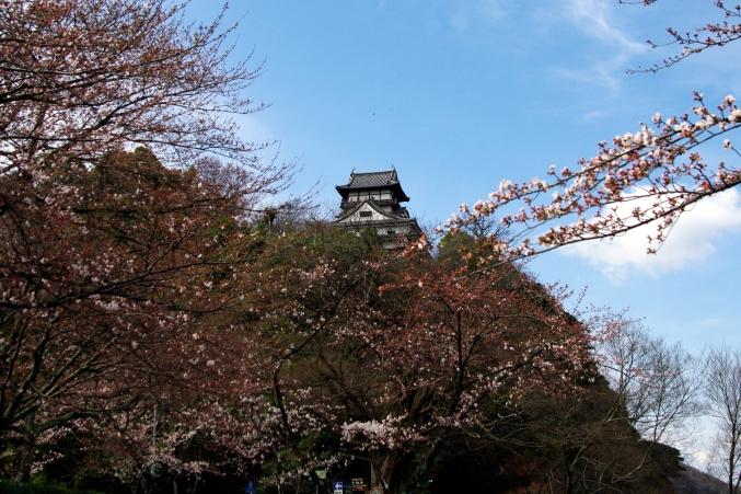 国宝・犬山城 桜_d0145934_8512215.jpg