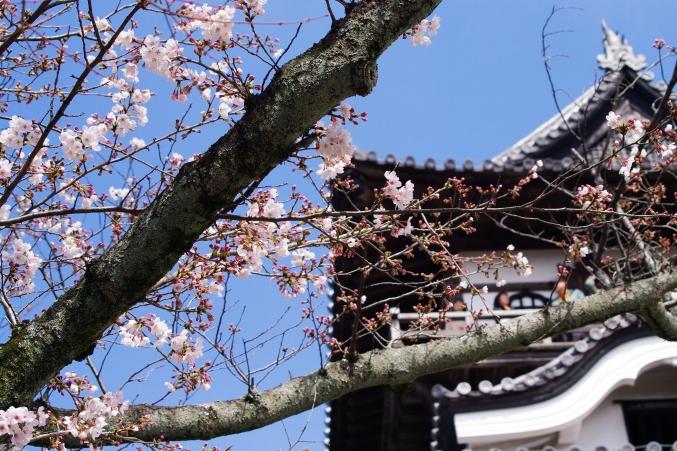 国宝・犬山城 桜_d0145934_8522890.jpg