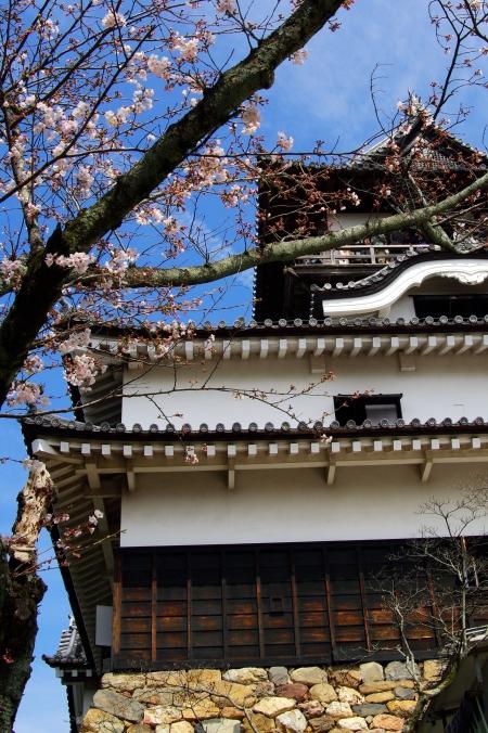 国宝・犬山城 桜_d0145934_852650.jpg