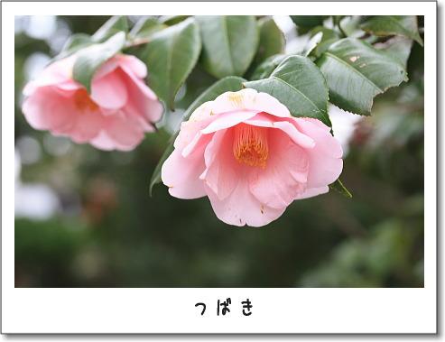 b0066947_1939571.jpg