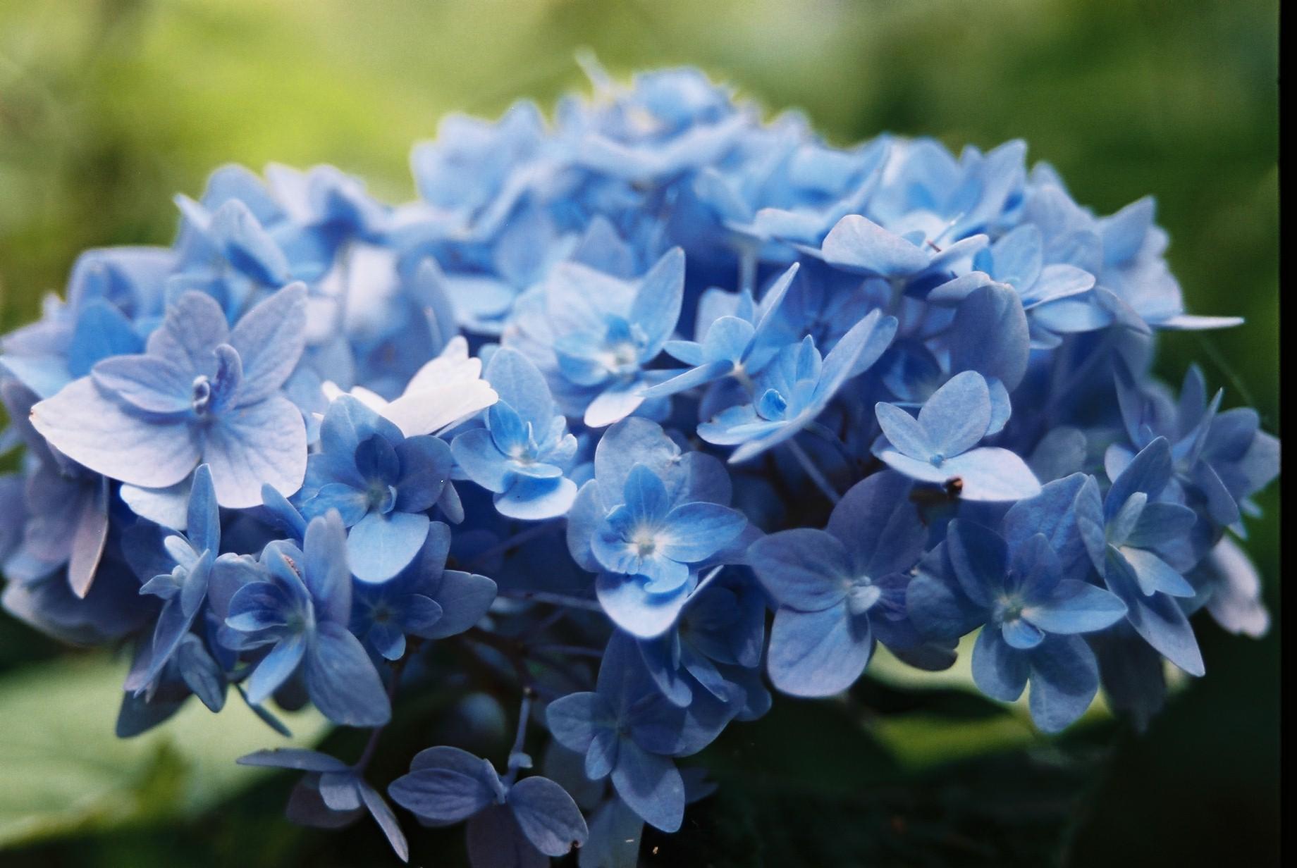 いよいよ春…花15_a0103650_13582542.jpg