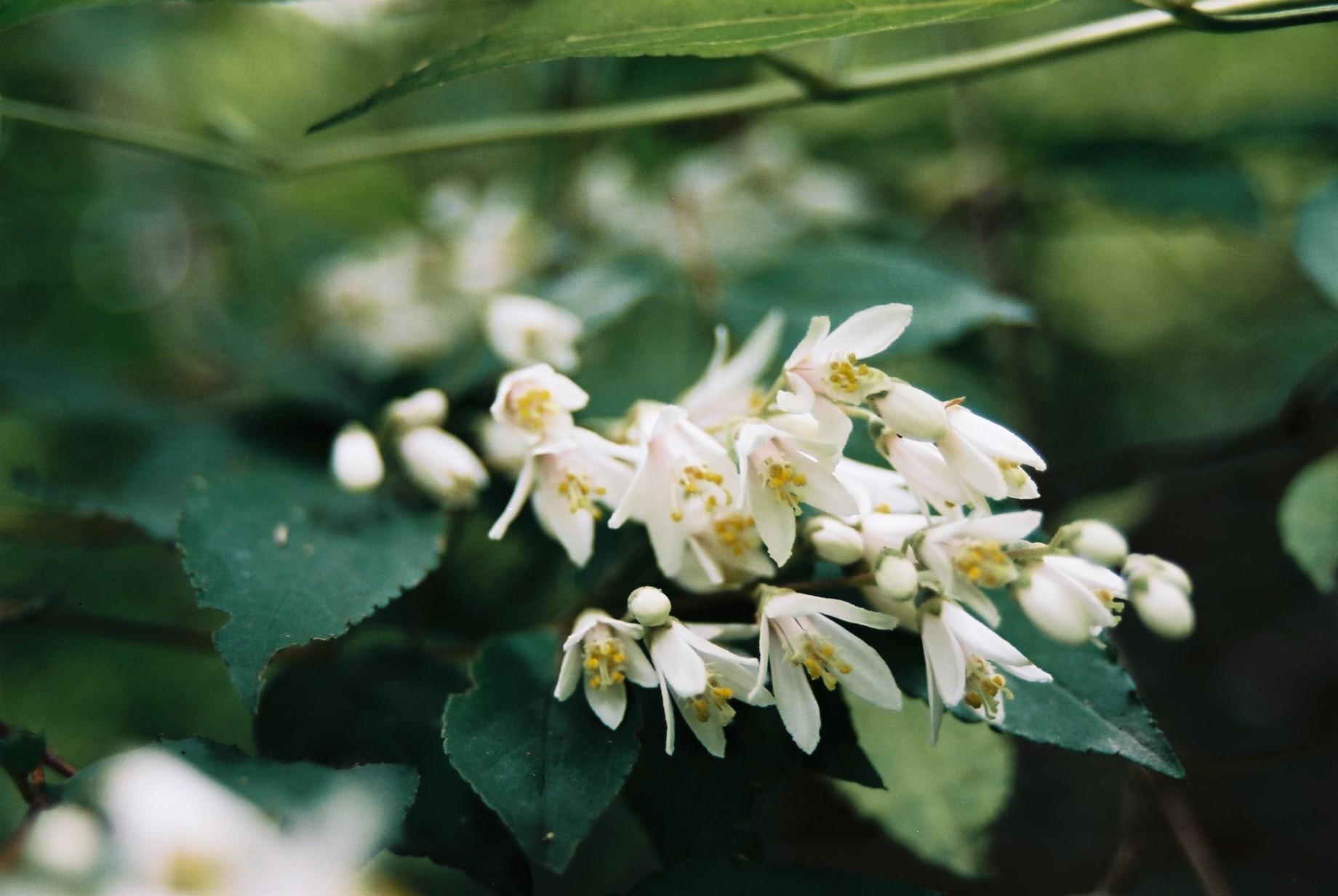 いよいよ春…花15_a0103650_13583433.jpg