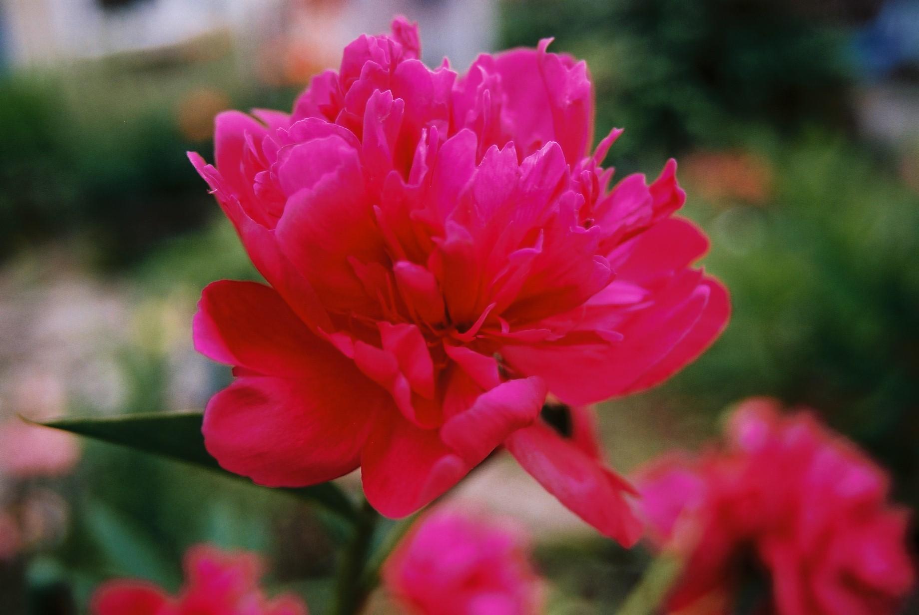 いよいよ春…花15_a0103650_1401638.jpg