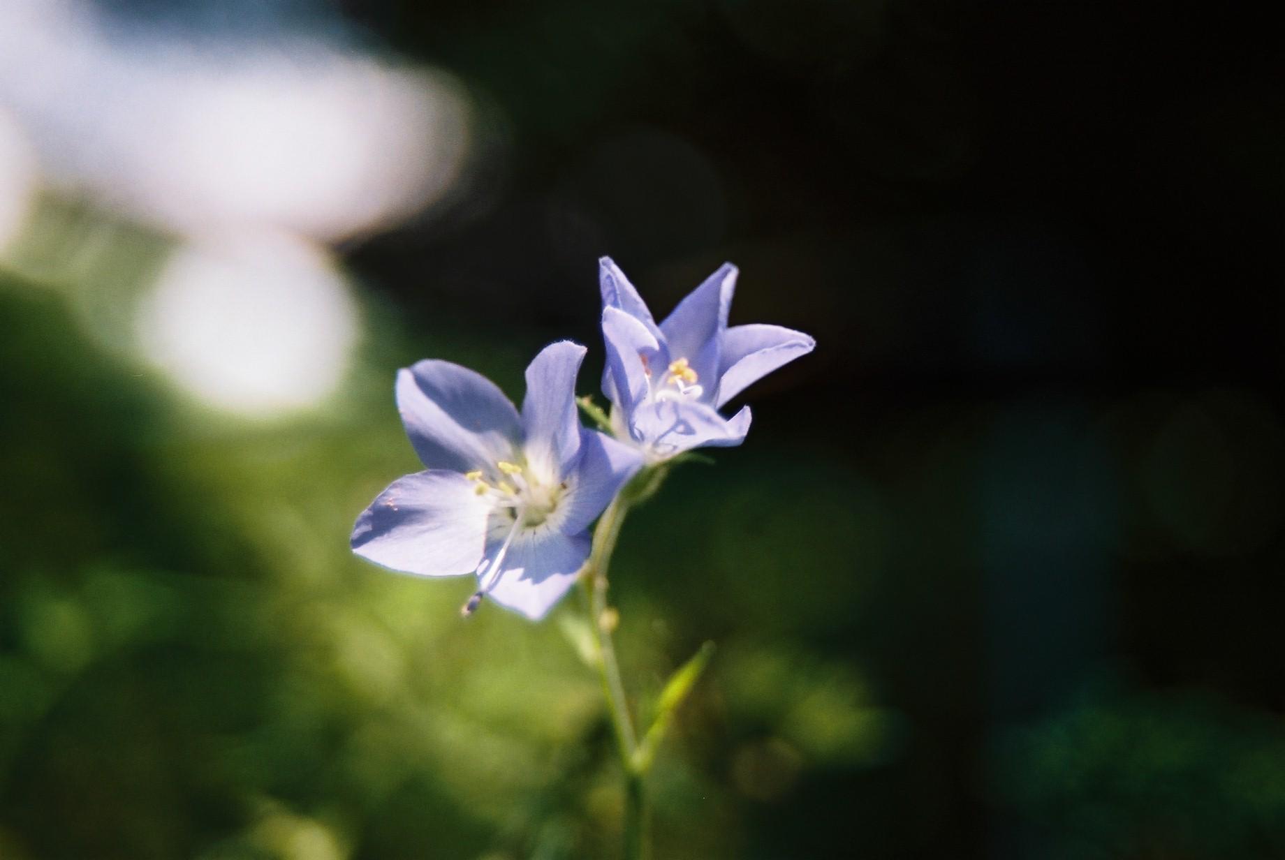 いよいよ春…花15_a0103650_1405912.jpg