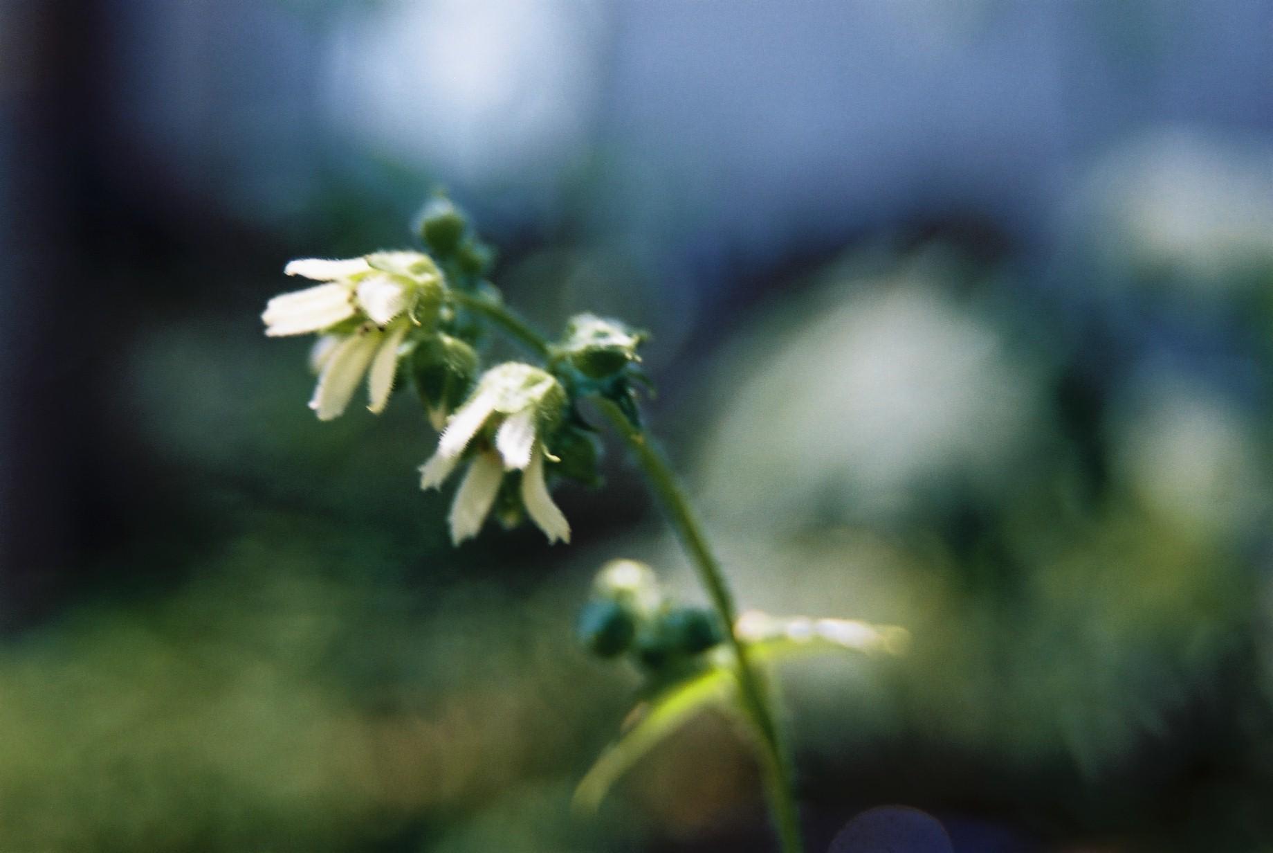 いよいよ春…花15_a0103650_1411828.jpg