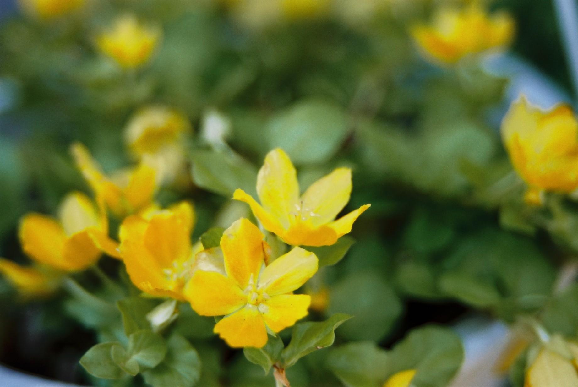 いよいよ春…花15_a0103650_141571.jpg