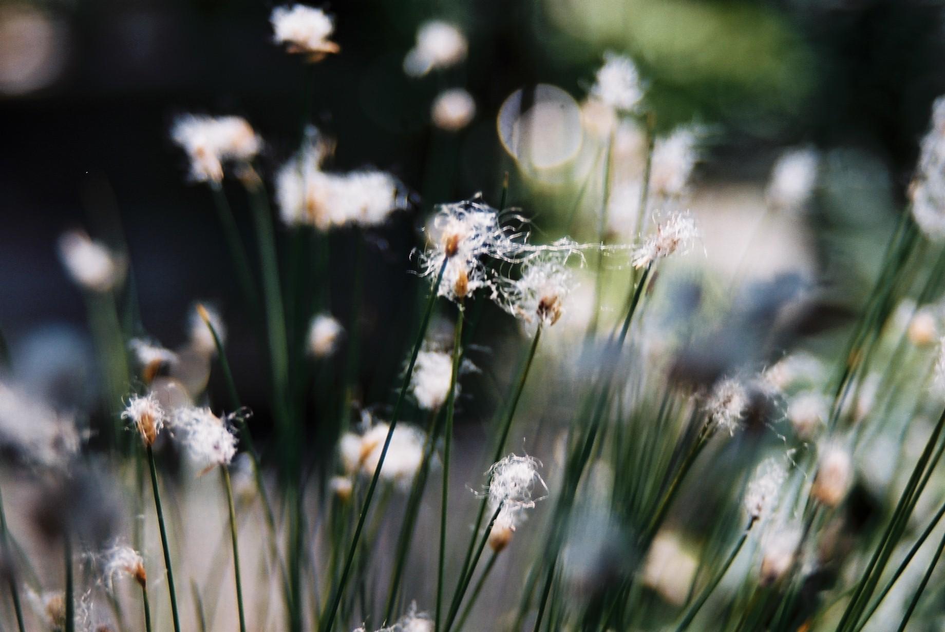 いよいよ春…花15_a0103650_141716.jpg