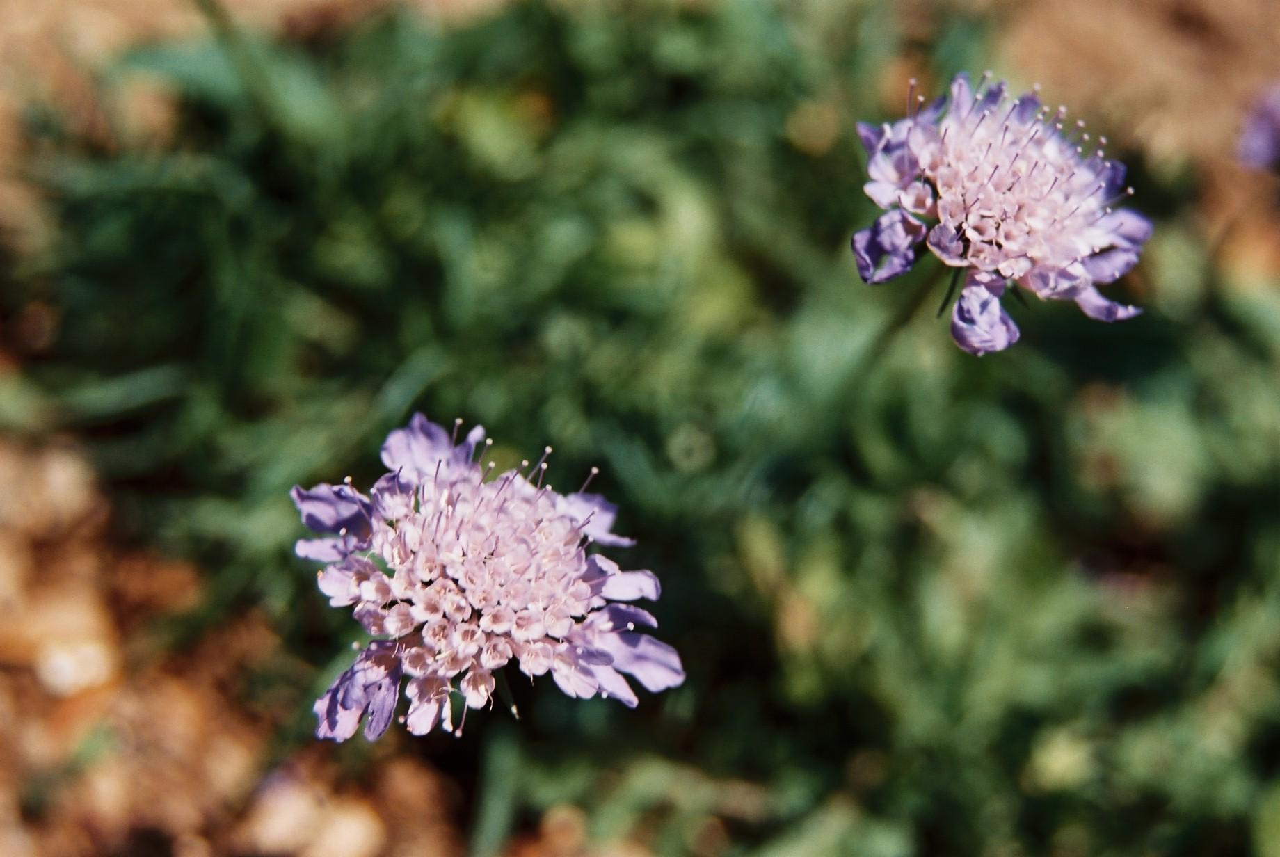 いよいよ春…花15_a0103650_1423735.jpg