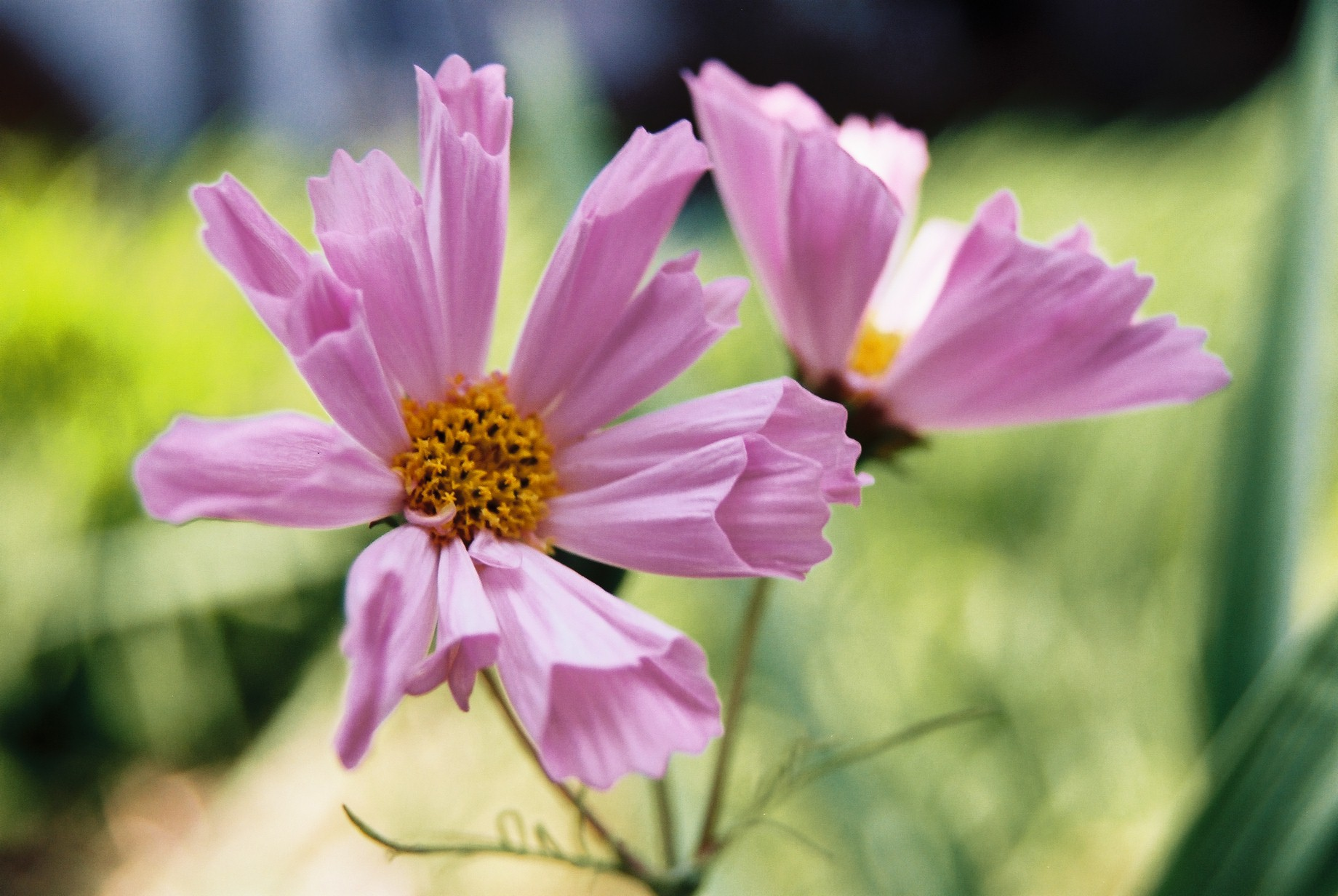 いよいよ春…花15_a0103650_1425247.jpg