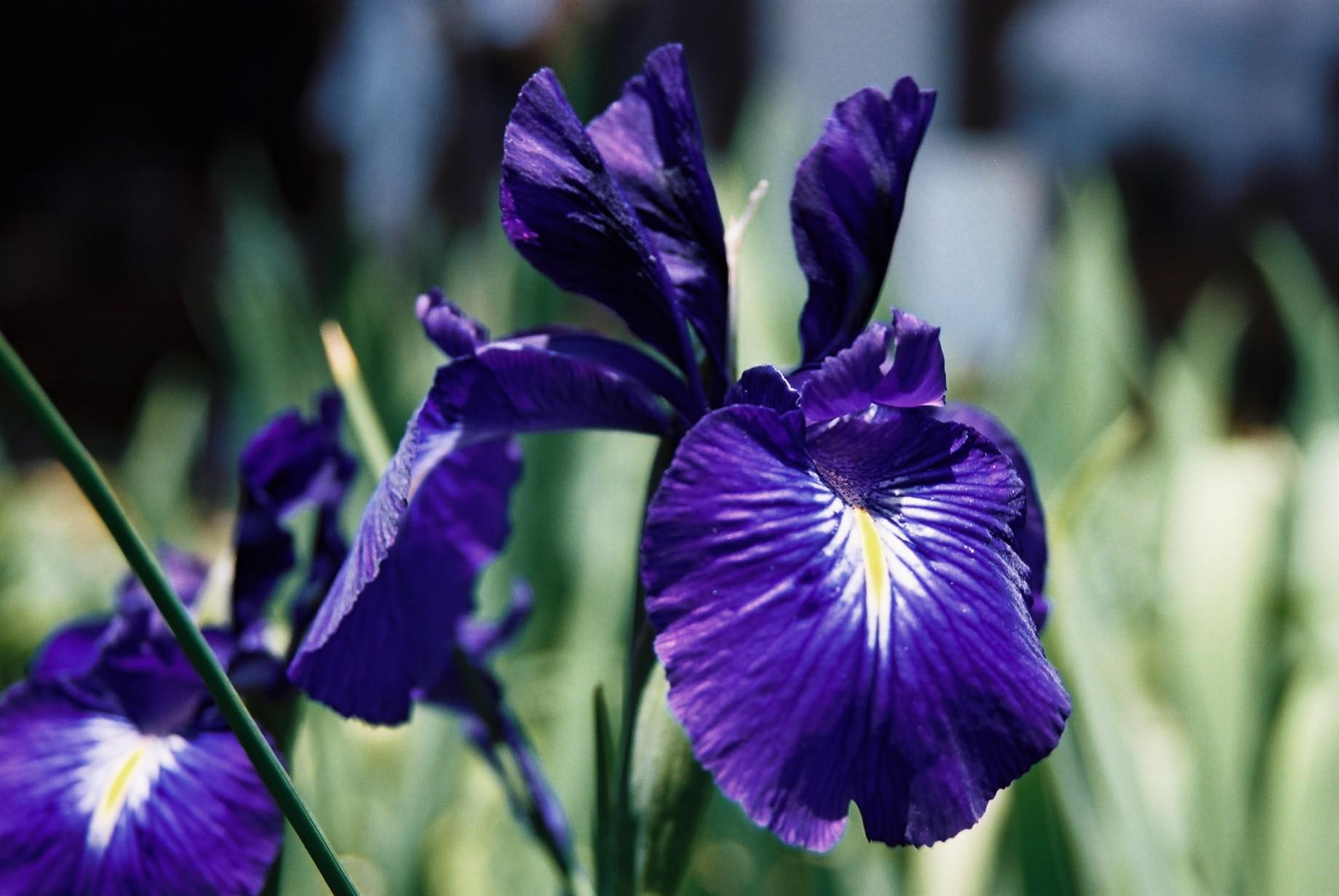 いよいよ春…花15_a0103650_1425916.jpg