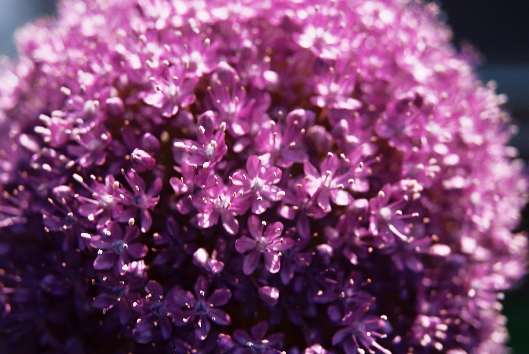 いよいよ春…花15_a0103650_1431769.jpg