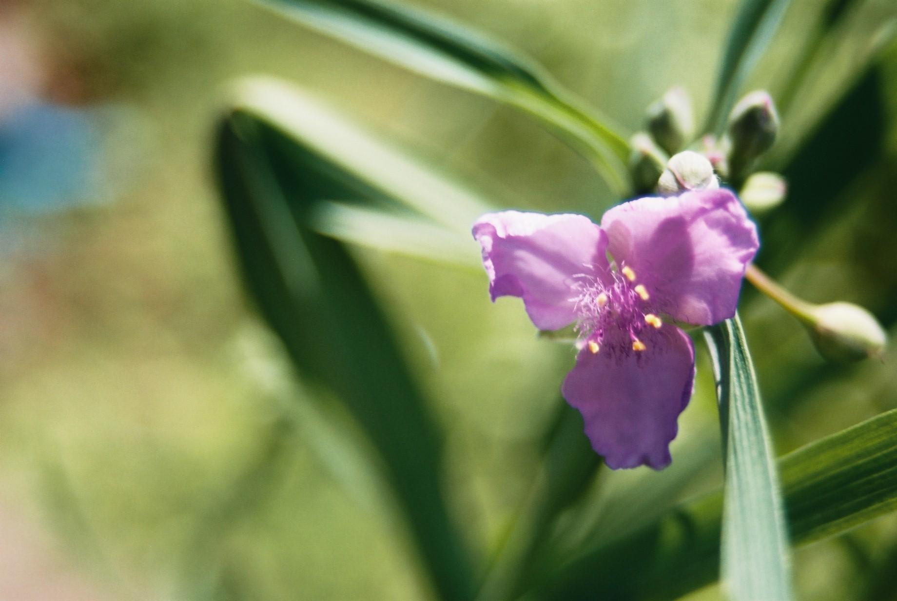 いよいよ春…花15_a0103650_1432522.jpg