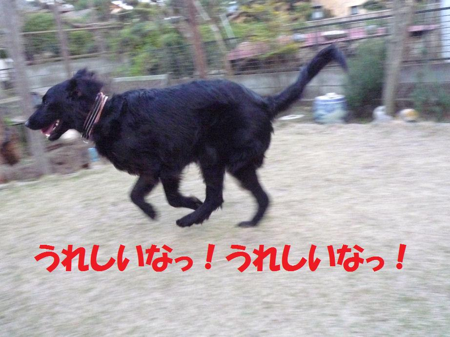 a0104464_1234959.jpg