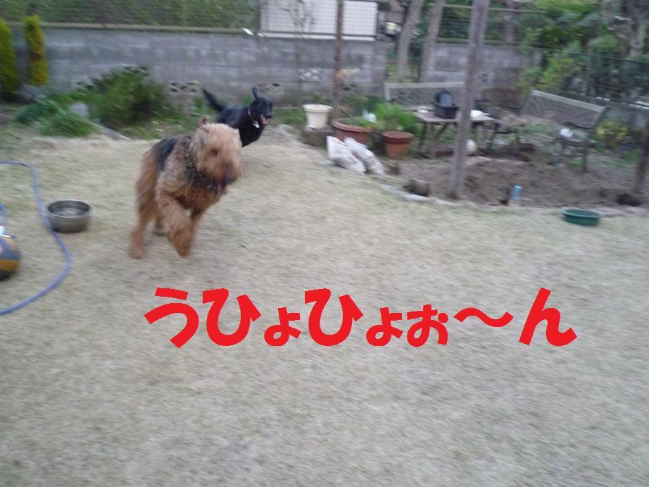 a0104464_1283711.jpg