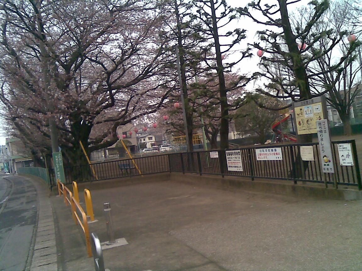 ホームタウンの桜状況 2_d0061678_21384114.jpg