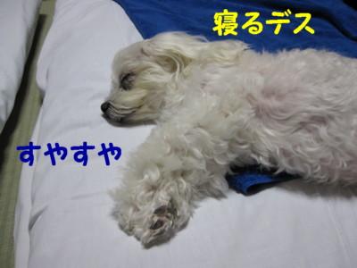 f0145192_1643811.jpg