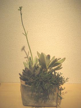 多肉植物はおもしろい_f0143397_1645888.jpg