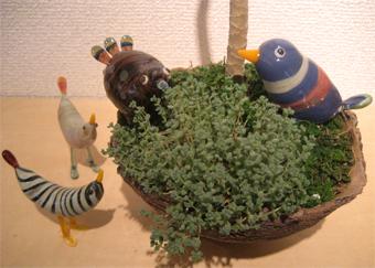 多肉植物はおもしろい_f0143397_16491769.jpg